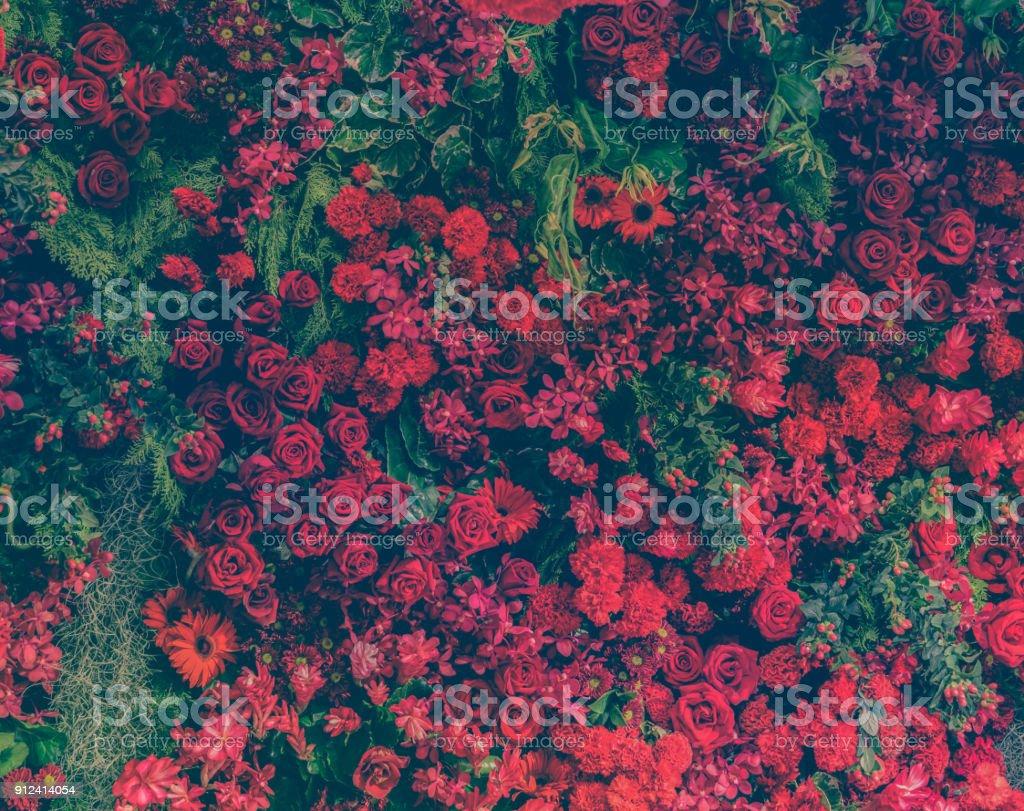 Schöne frische rote Rosen und verschiedene Arten von roten Blumen dekoriert Gartenmauer – Foto