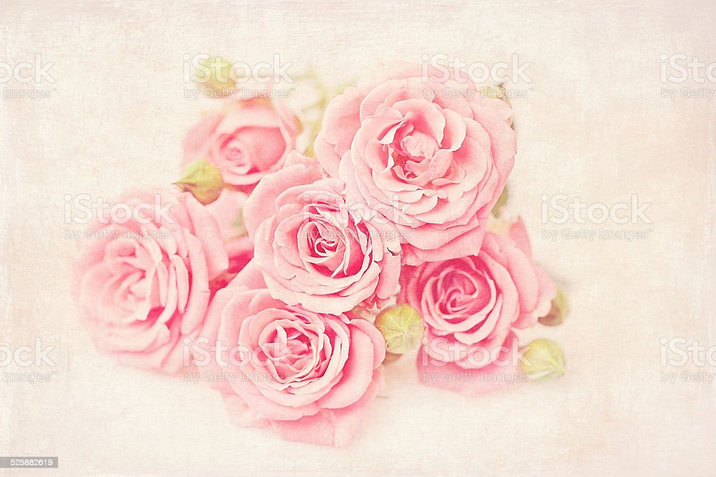 Schöne frische Rosen Lizenzfreies stock-foto