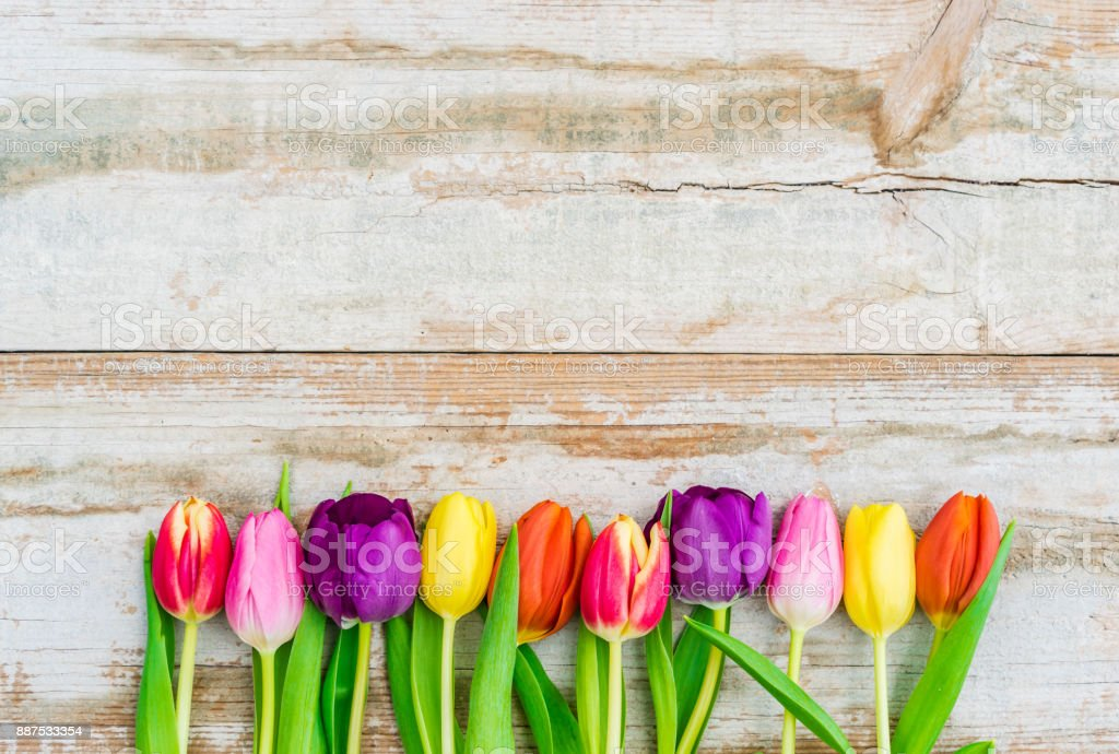 Beautiful fresh tulip spring flowers on rustic wooden background stock photo