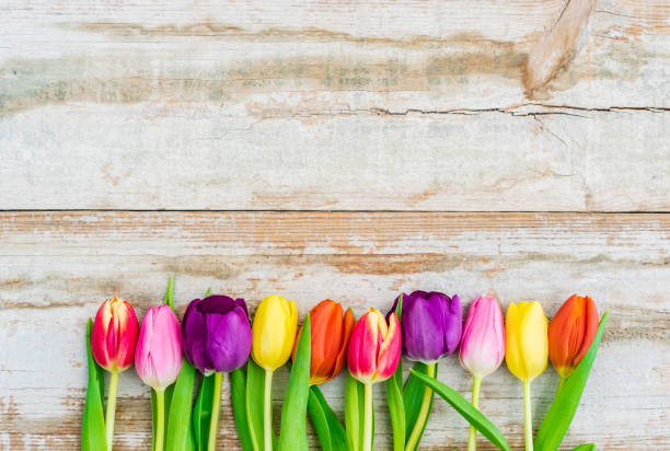 beautiful fresh tulip spring flowers on rustic wooden background - marzo foto e immagini stock