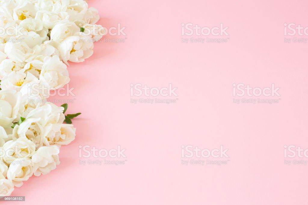 Fondo De Pantalla Flores Blancas En Fondo Rosa: Bellas Frescas Rosas Blancas En Fondo Rosa Pastel Suave