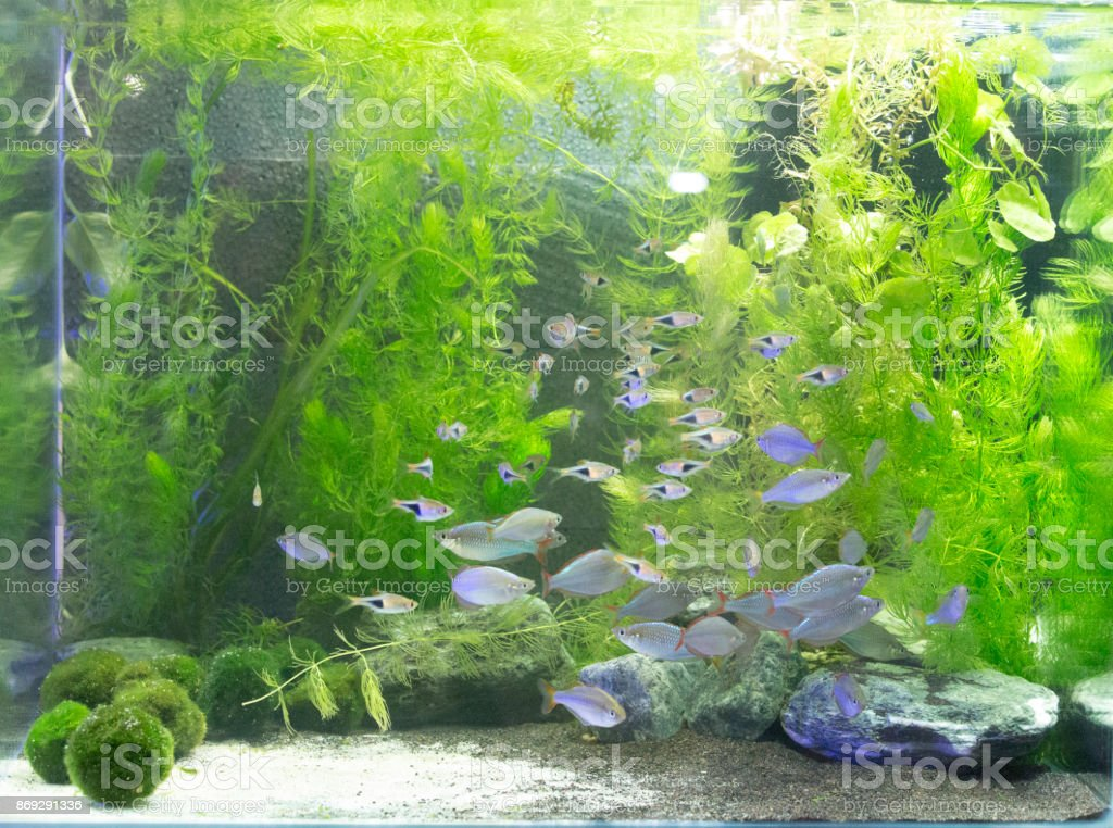 Beautiful Freshwater Planted Aquarium Stock Photo More Pictures Of
