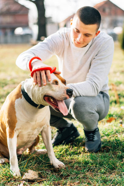Beautiful friendship between dog and man. stock photo