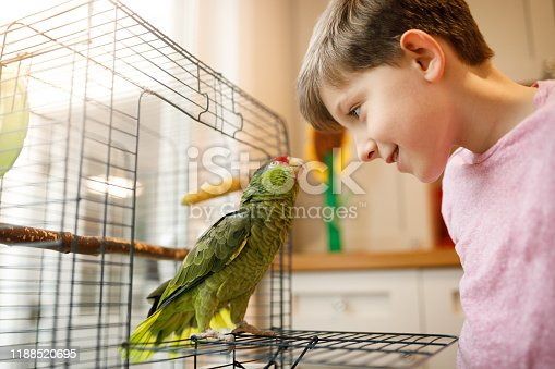 istock Beautiful friendship between kid and parrot 1188520695