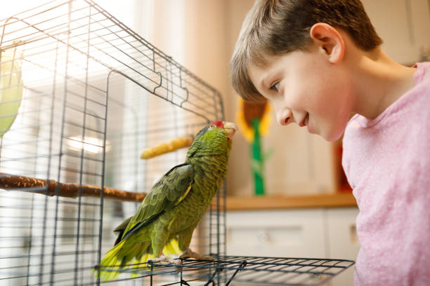 Beautiful friendship between kid and parrot stock photo