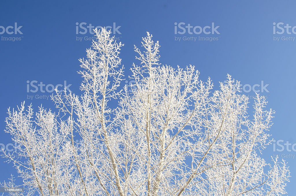 Beautiful Frost... Winter Background royalty-free stock photo