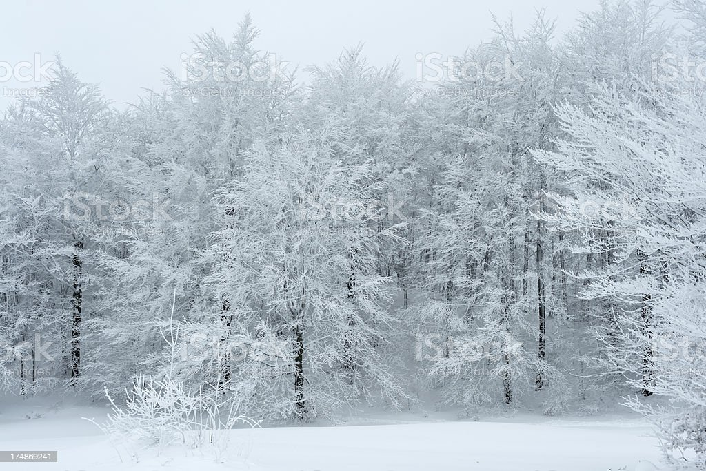 Beautiful Frosty Forest Winter in Slovenia royalty-free stock photo