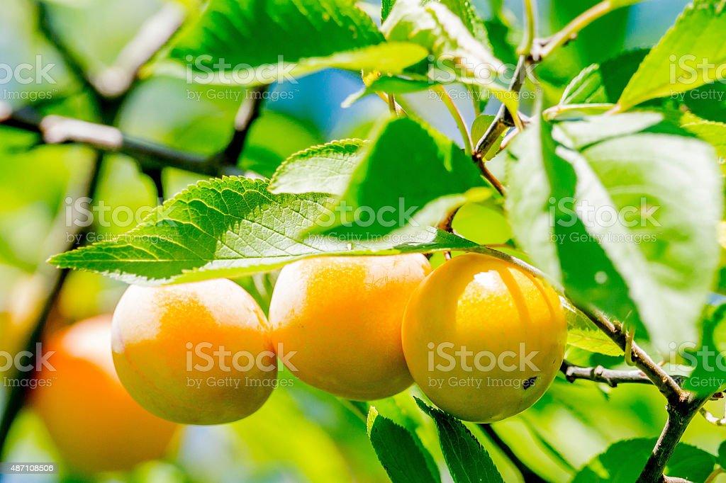 Beaux frutas - foto de acervo