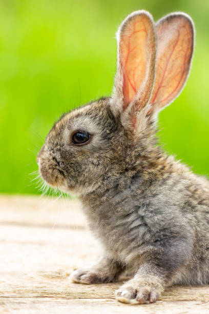 Beautiful funny grey rabbit on a natural green background stock photo