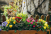 Colorful beautiful Easter flowers in big flowerpot in garden on sunny spring day