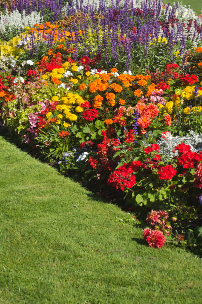 Beautiful garden flower bed stock photo