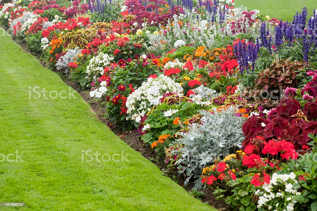Beautiful garden flower bed foto