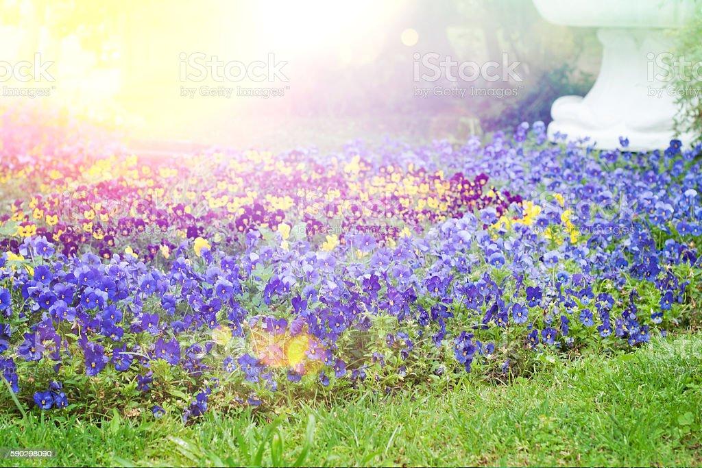 Красивый сад  Стоковые фото Стоковая фотография