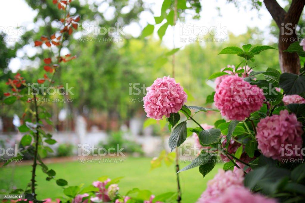 Wunderschöne Garten – Foto