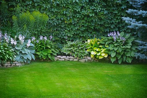 Beautiful Garden With Green Grass - Fotografias de stock e mais imagens de Ajardinado