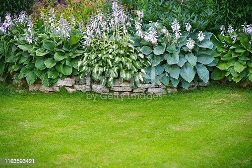Beautiful garden, lawn with green grass