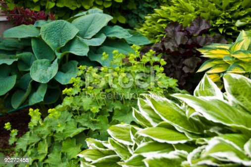 istock Beautiful garden with hostas and perennial plants 92272458