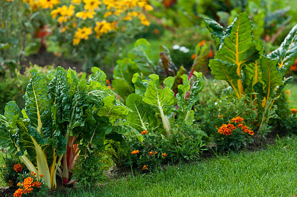 Beautiful garden with leafy vegetables and bright colored flowers stock photo