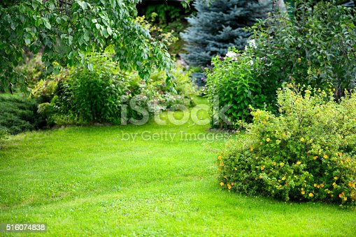 beautiful garden with trees, lawn with green grass