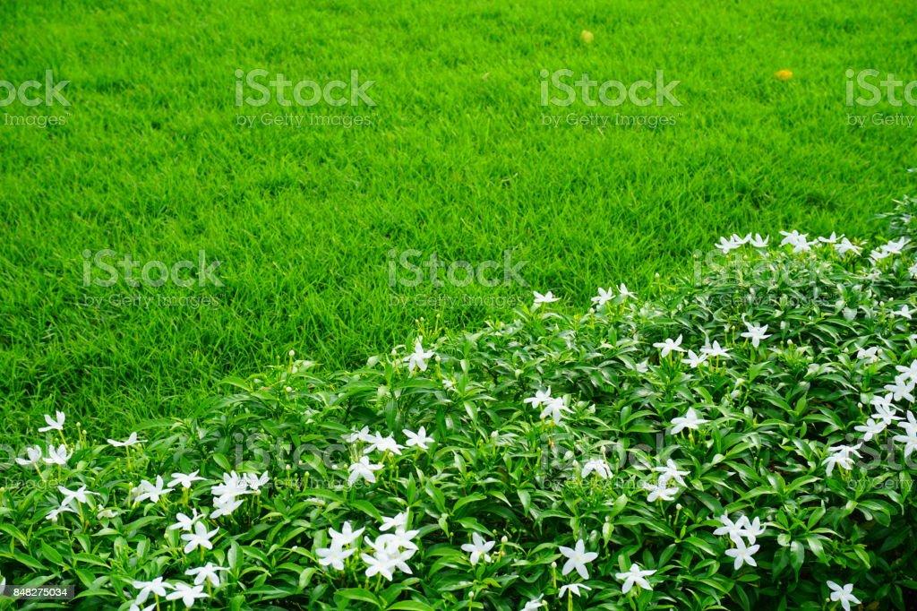 Schöner Garten Mit Bäumen, Rasen Mit Grünen Rasen Lizenzfreies Stock Foto