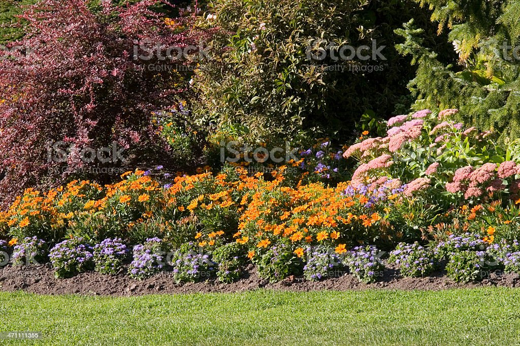 Beautiful gardening royalty-free stock photo