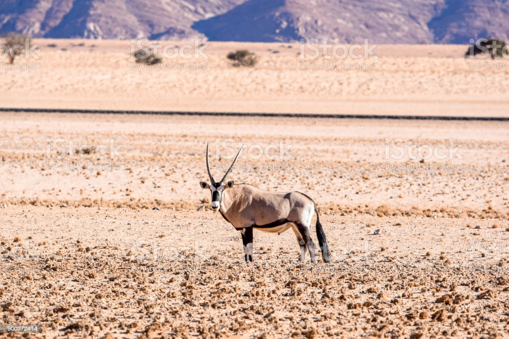 Beautiful Gemsbok, also called Oryx antelope, standing in the Namib Desert in Namibia, Africa, near the town of Lüderitz  / Lüderitz. Mountains and train tracks in the background. stock photo