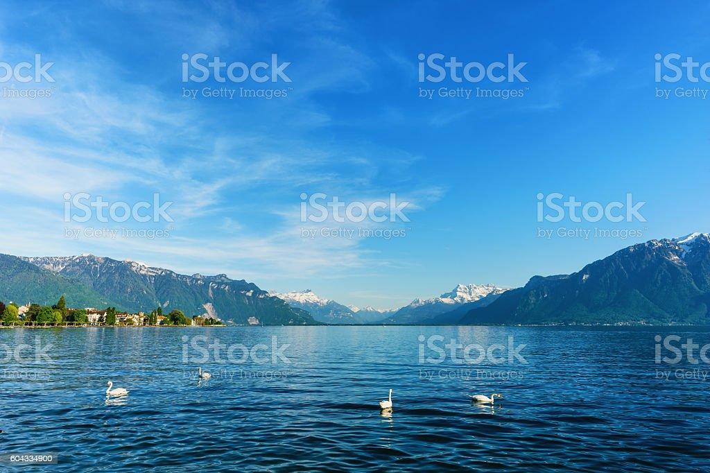 Beautiful Geneva lake at Vevey in summer stock photo