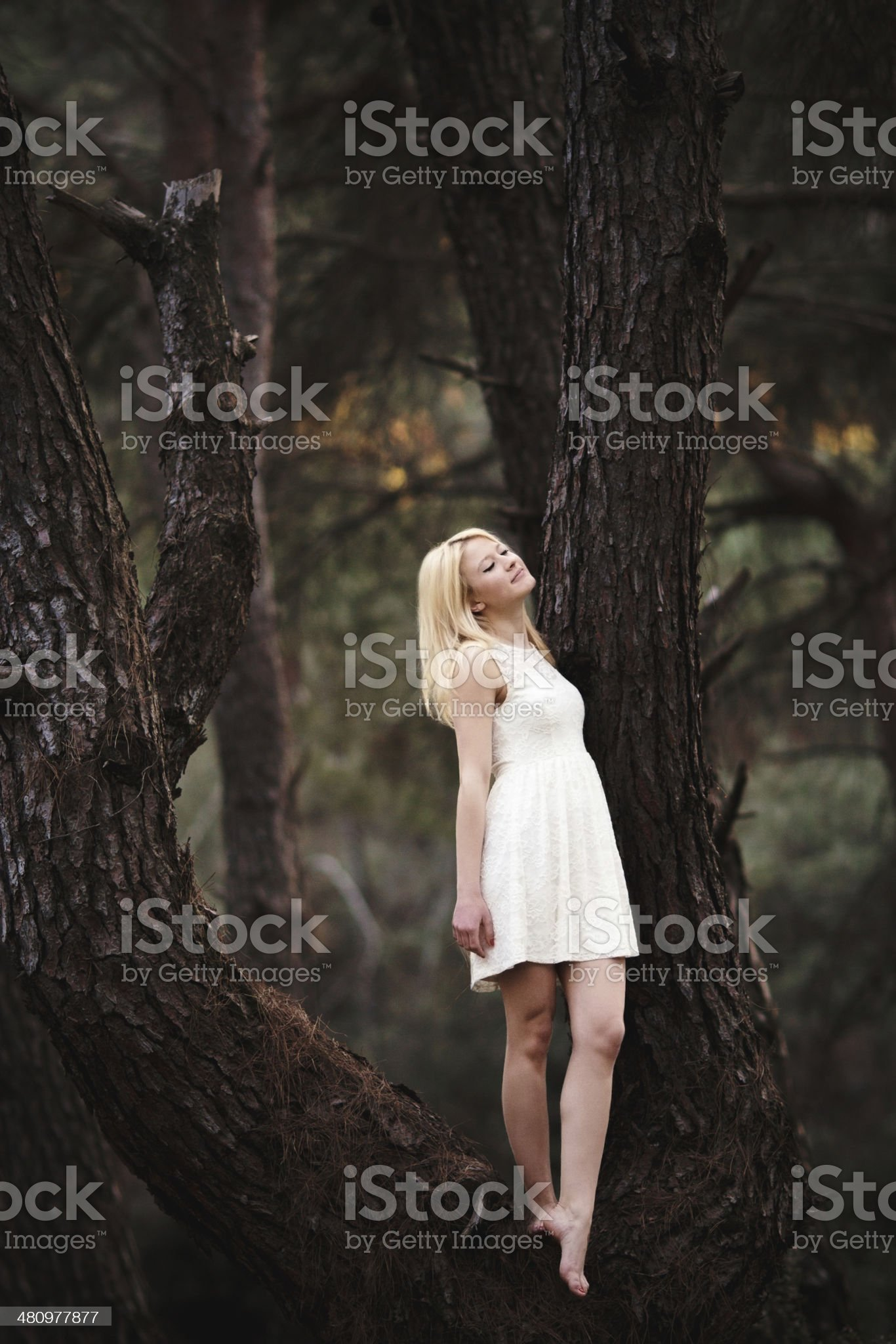 https://media.istockphoto.com/photos/beautiful-girl-in-a-forest-on-tree-picture-id480977877?s=2048x2048