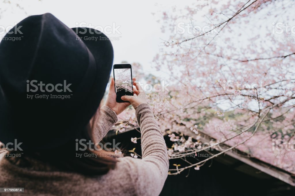 Beautiful girl traveler Sightseeing in Chiang Mai Thailand using smartphone take a photo Cherry blossom stock photo