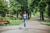Beautiful young woman walking through the park with her Maltese puddle.