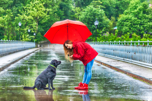beautiful girl with umbrella talking to a dog - fall prevention stock photos and pictures