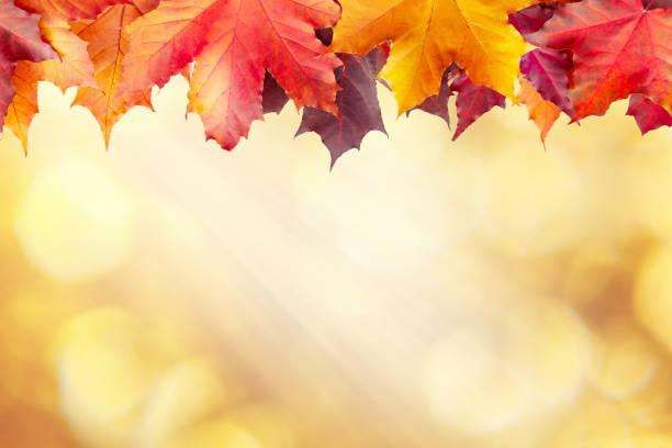 Schöne goldene Herbst verschwommenen Hintergrund mit einem Rand von Ahornblättern – Foto