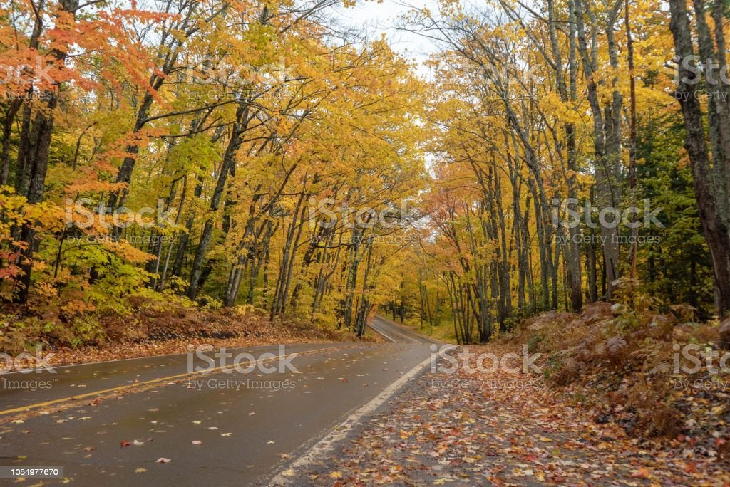 Beautiful golden Autumn trees along a road in Michigan stock photo