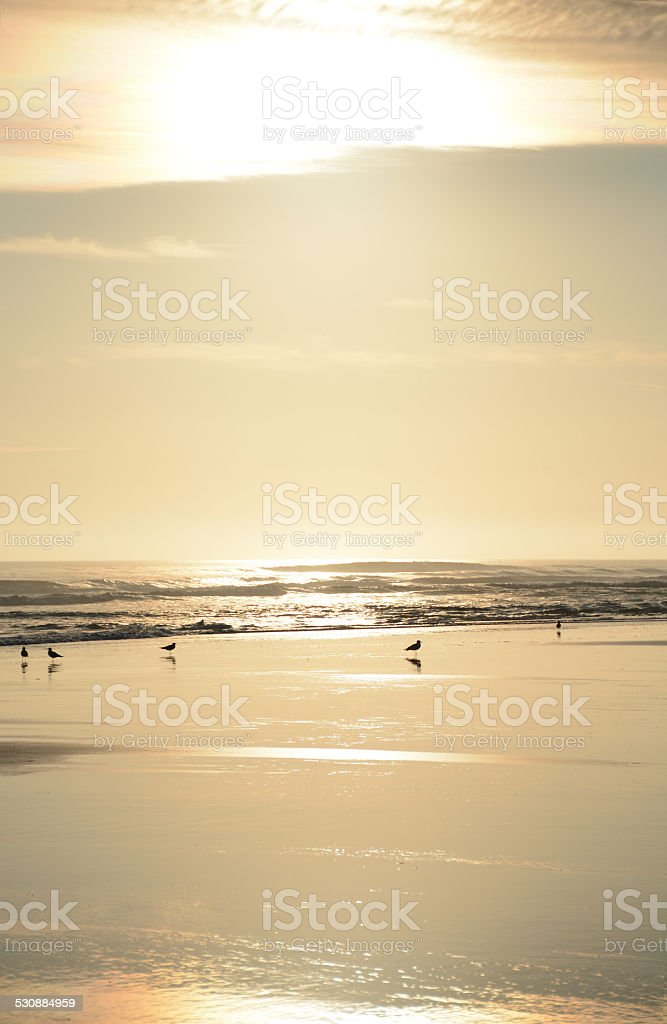 Beautiful golden beach stock photo