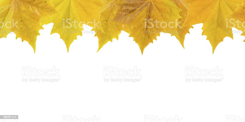 Belle foglie d'oro in autunno foto stock royalty-free