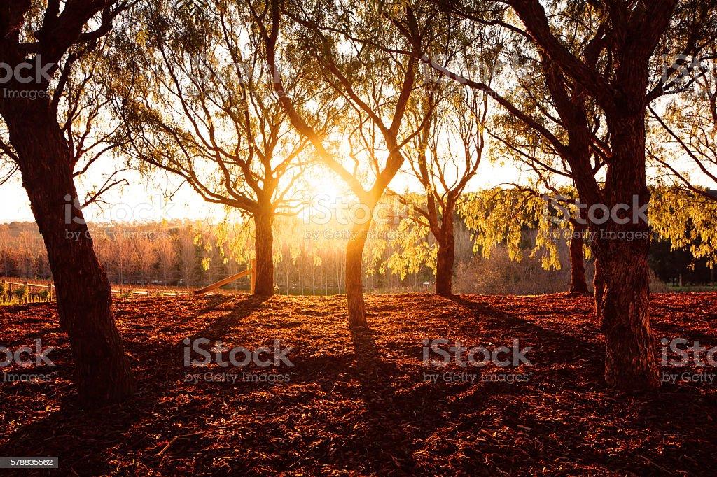 Beautiful golden park sunlight stock photo