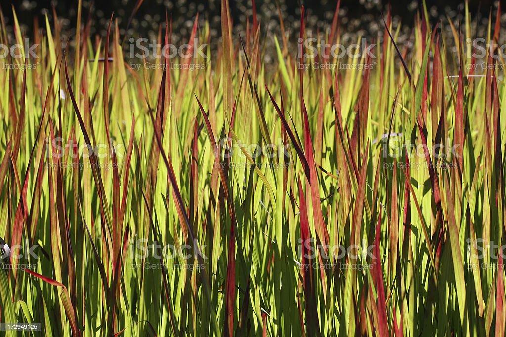 Beautiful grass background royalty-free stock photo