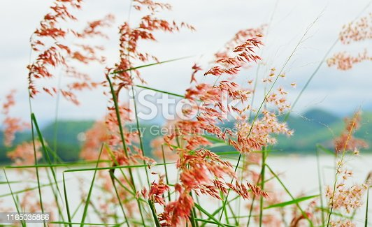 Backgrounds, Nature, Flower, Abstract, Autumn