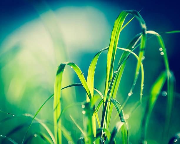 Schöne Gras – Foto