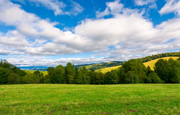 beautiful grassy meadow on hillside in mountains stock photo