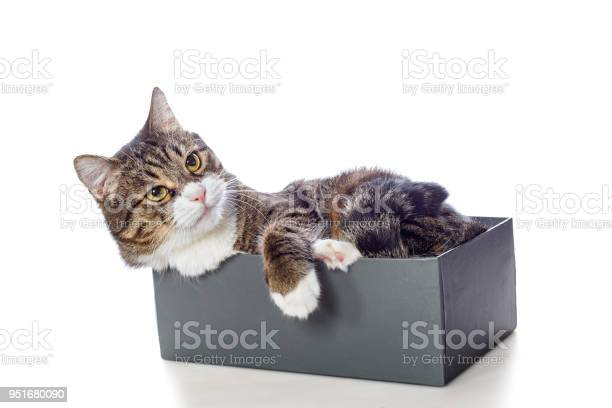 Beautiful gray cat lying in a box picture id951680090?b=1&k=6&m=951680090&s=612x612&h=qoabfvk0br0das0cxmrsta1yex9qzdbom5qg2v6rjp4=