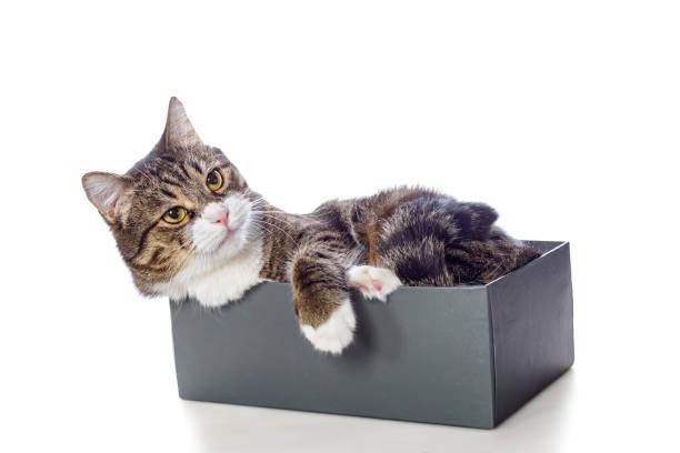 Beautiful gray cat lying in a box picture id951680090?b=1&k=6&m=951680090&s=612x612&w=0&h=3o6rmmmevagwmwpnouirv5uwx2vif1mtwmjy7jajuzo=
