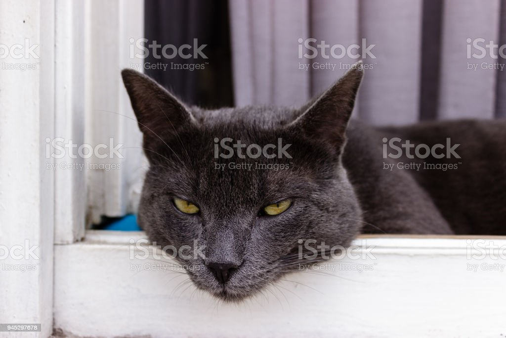 Beautiful gray cat resting on a wooden  window sill stock photo