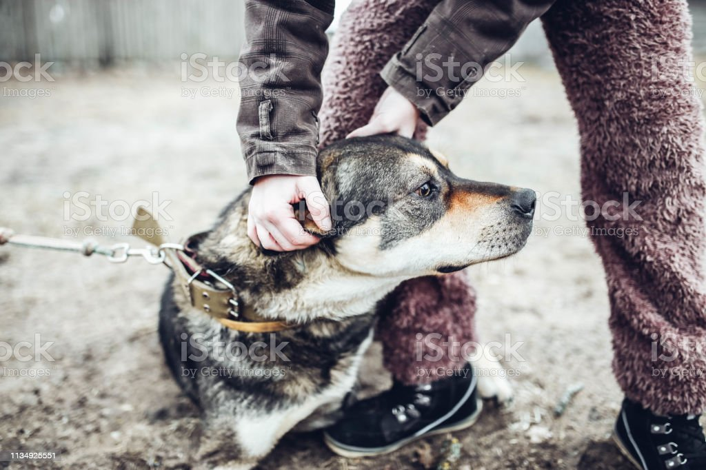 beautiful gray dog playing with a man, pet friendship concept for a...