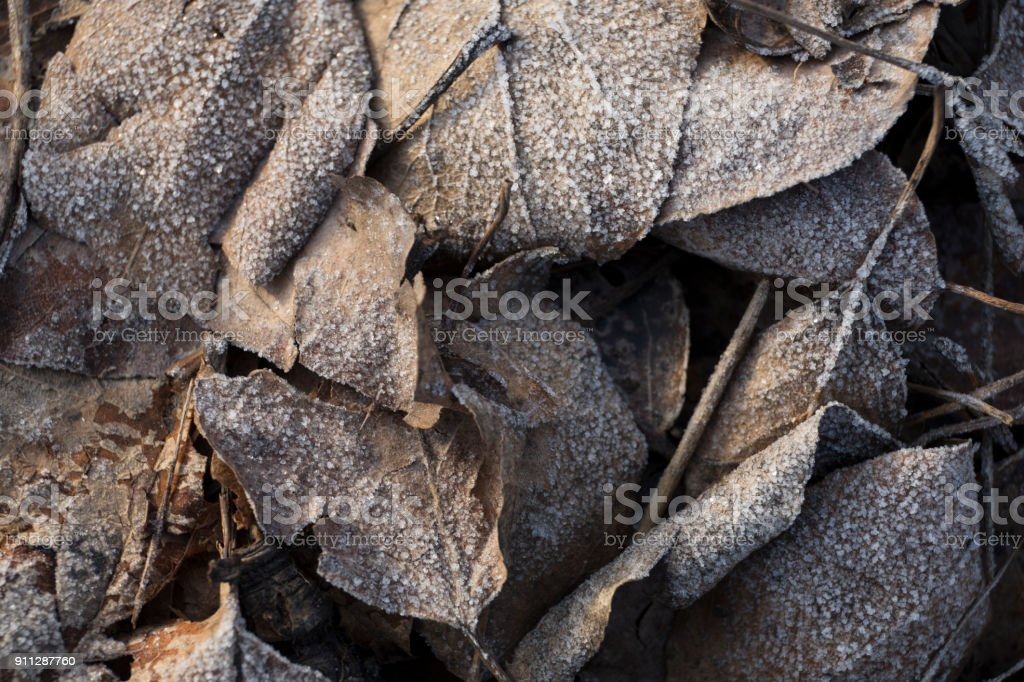 Beautiful gray frozen leaves in the sunlight close-up background royalty-free stock photo
