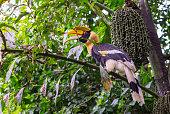 Beautiful Great hornbill on tree