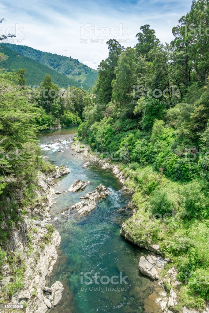Beautiful green and clear pelorus river, known from the movie hobit. South Island, New Zealand stock photo