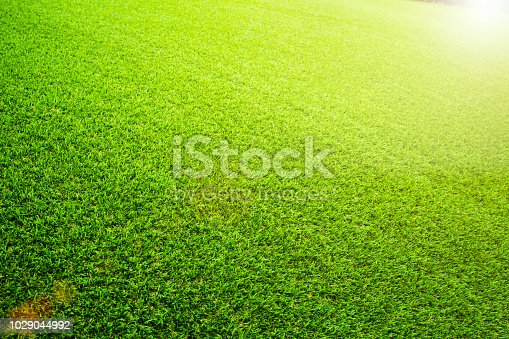 istock Beautiful Green artificial grass background vignette or the naturally walls texture Ideal for use in the design fairly. natural pattern texture fresh spring from golf course or  soccer field. 1029044992