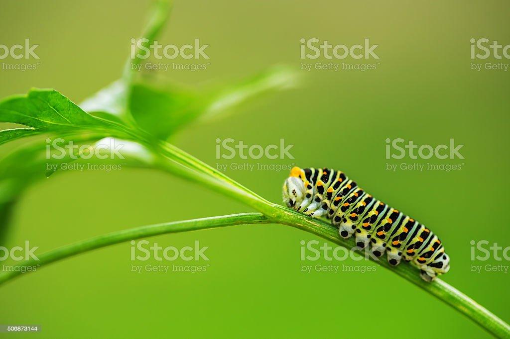 Lindos verdes Caterpillar o grupo de proteção em uma grama verde - foto de acervo