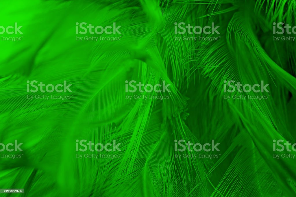 Beautiful Green Chartreuse Vintage Color Trends Feather Pattern